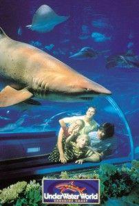 Underwater world Sunshine Coast Mooloolaba